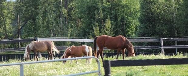 (Image: The Rusty Horseshoe Ranch).