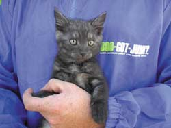 1-800-GOT-JUNK workers have picked up cats from clients - both of the mummified and living variety. The kitten here was found in a discarded fridge and appropriately named 'Freon.'